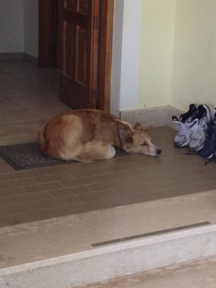 Sabi (the neighbours dog) at her 2nd home