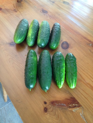 Too many cucumbers already.