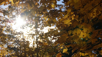 Sunlight through the autumn leaves - Katie Fleming