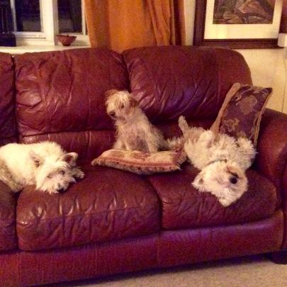 This is how you watch TV - Millie, Megan & Alfie