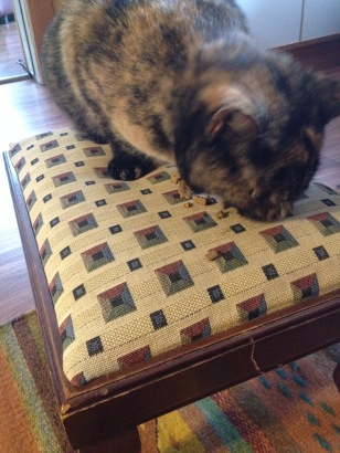 The treat stool - don't all cats have them?