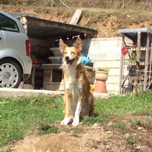 Sabbia - 2nd Sweetest Dog