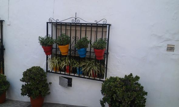 Beauty on the Windowsill