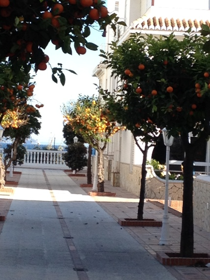 Quiet courtyard and oranges trees